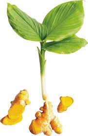 Warum Kurkuma die weltweit wichtigste Heilpflanze ist…
